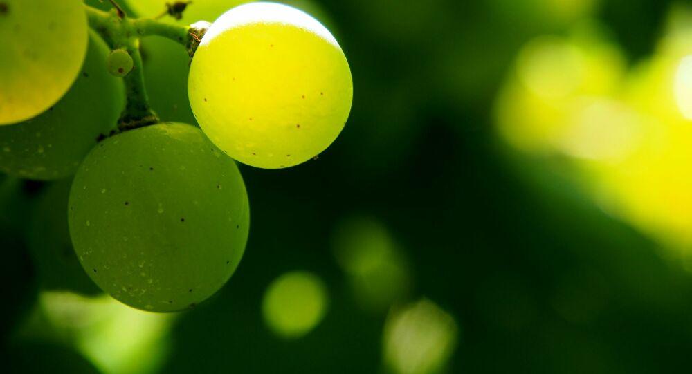 El Vino del Desierto: único y 100% chileno - larazon.cl 1